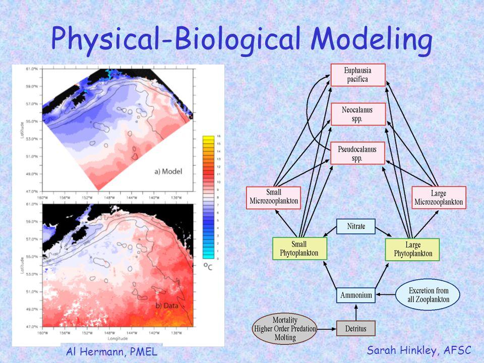 Physical-Biological Modeling Al Hermann, PMEL Sarah Hinkley, AFSC