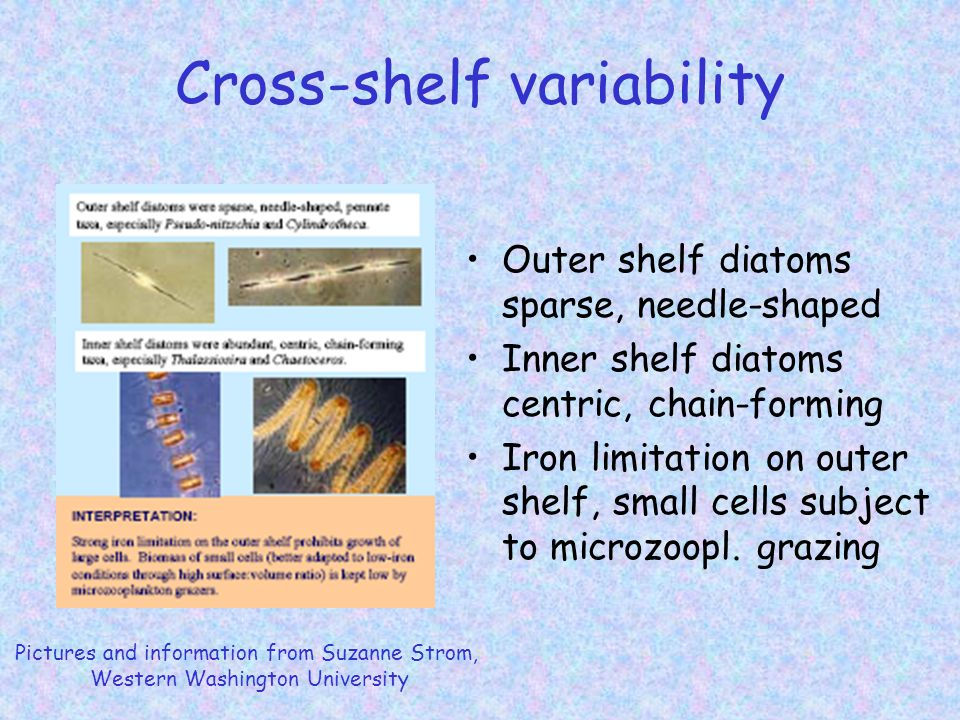 Along-shelf variability Andy Thomas, University of Maine Phyllis Stabeno, PMEL