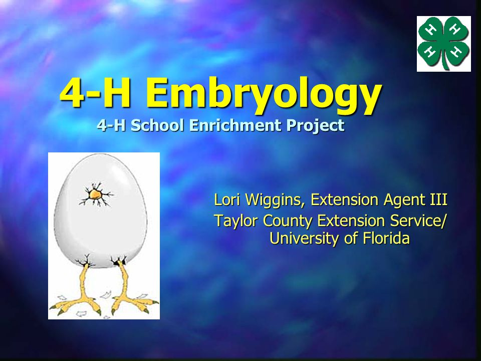 4-H Embryology 4-H School Enrichment Project n EGG-SPLORE the science of embryology from egg to chicken.