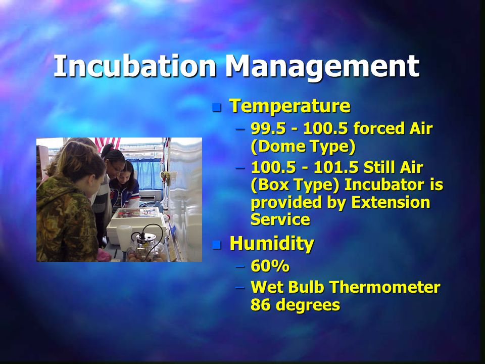 Incubation Management n Temperature –99.5 - 100.5 forced Air (Dome Type) –100.5 - 101.5 Still Air (Box Type) Incubator is provided by Extension Service n Humidity –60% –Wet Bulb Thermometer 86 degrees