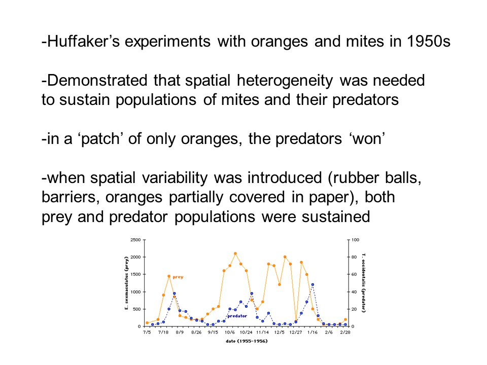 -Huffaker's experiments with oranges and mites in 1950s -Demonstrated that spatial heterogeneity was needed to sustain populations of mites and their predators -in a 'patch' of only oranges, the predators 'won' -when spatial variability was introduced (rubber balls, barriers, oranges partially covered in paper), both prey and predator populations were sustained