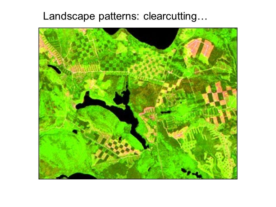 Landscape patterns: clearcutting…