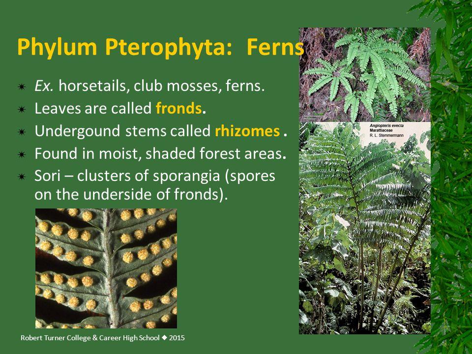 Robert Turner College & Career High School  2015 Phylum Pterophyta: Ferns  Ex. horsetails, club mosses, ferns.  Leaves are called fronds.  Undergo