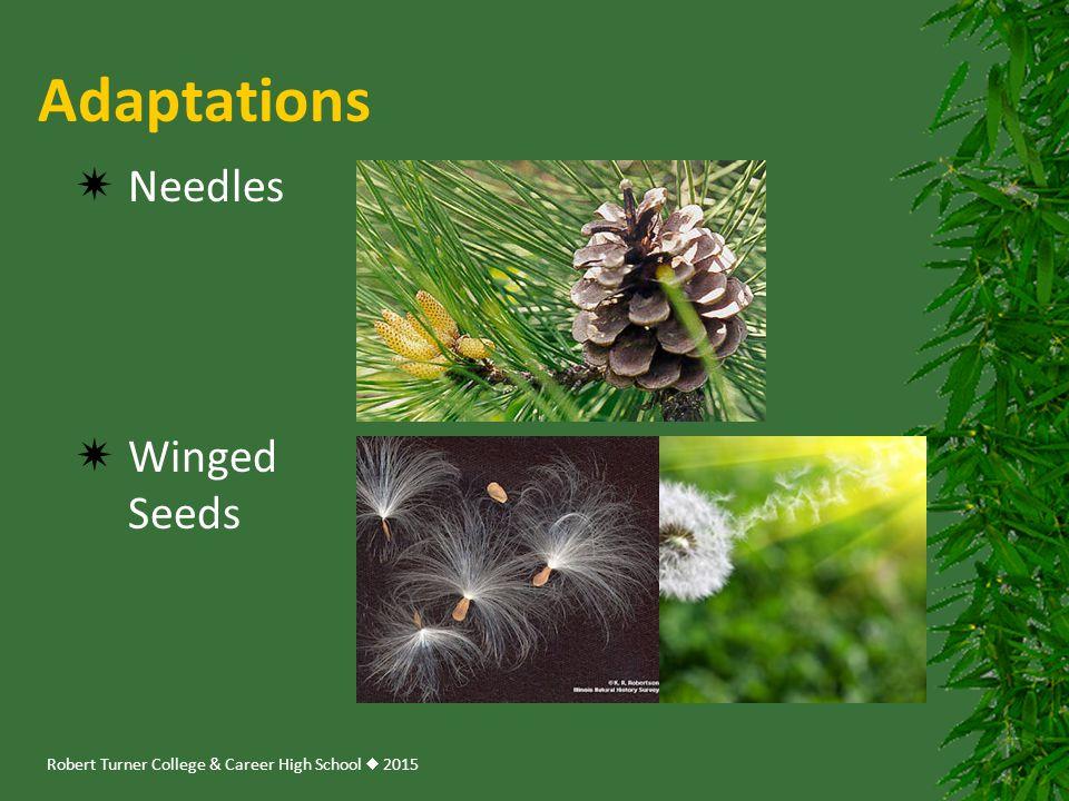Robert Turner College & Career High School  2015 Adaptations  Needles  Winged Seeds