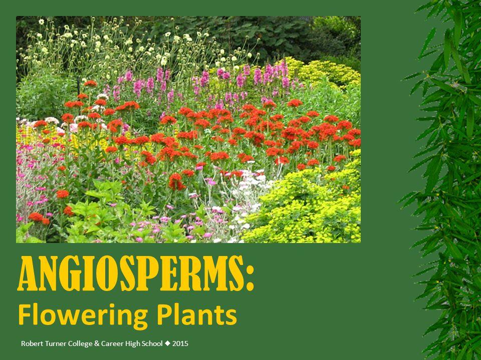 Robert Turner College & Career High School  2015 ANGIOSPERMS: Flowering Plants