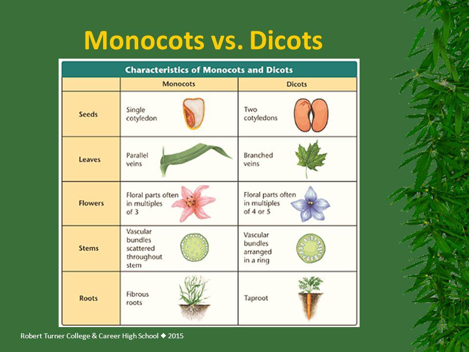 Robert Turner College & Career High School  2015 Monocots vs. Dicots