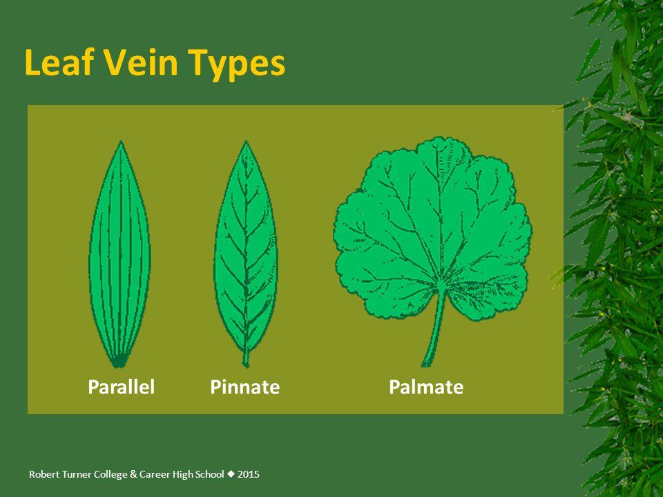 Robert Turner College & Career High School  2015 Leaf Vein Types Parallel Pinnate Palmate