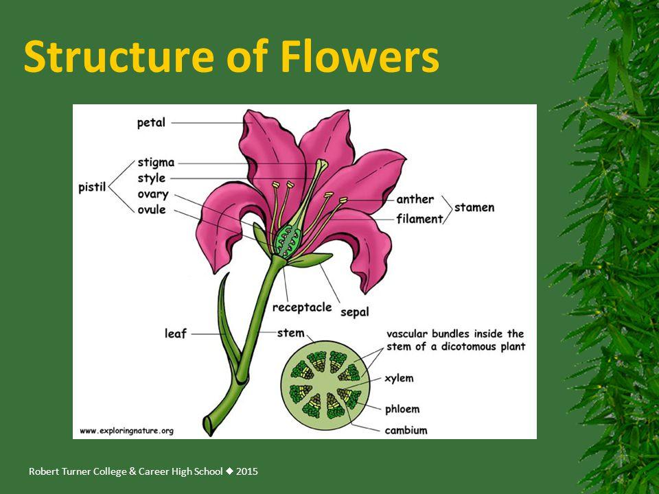 Robert Turner College & Career High School  2015 Structure of Flowers