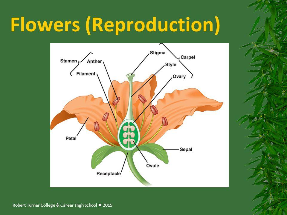 Robert Turner College & Career High School  2015 Flowers (Reproduction)