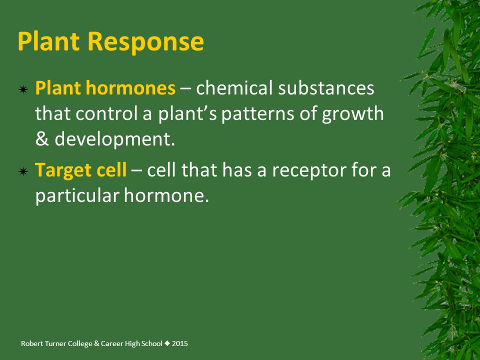 Robert Turner College & Career High School  2015 Plant Response  Plant hormones – chemical substances that control a plant's patterns of growth & de
