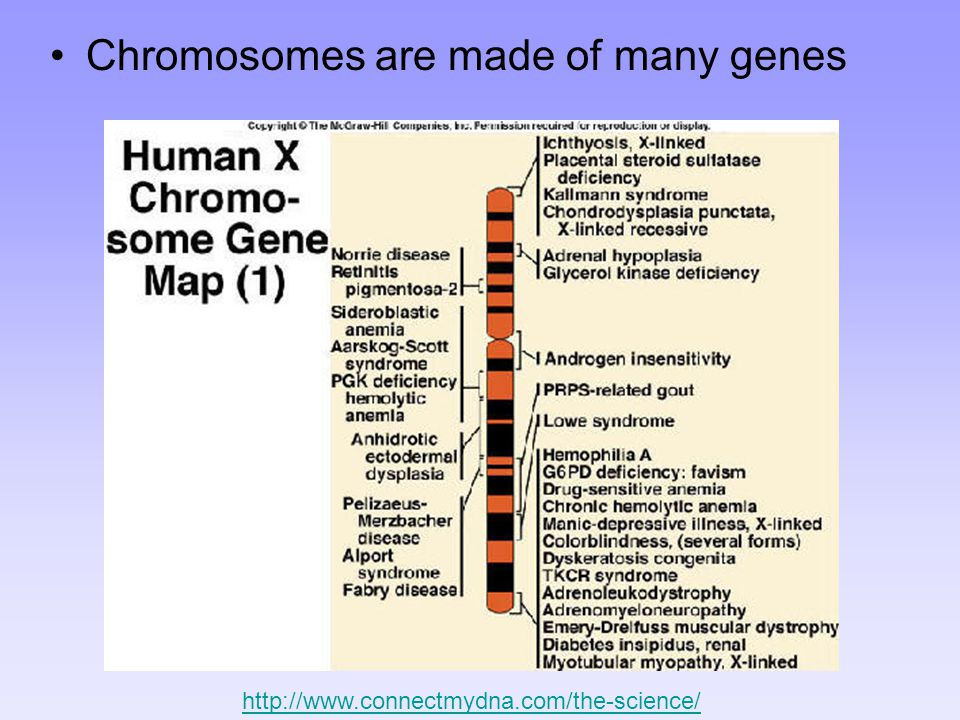 Chromosomes are made of many genes http://www.connectmydna.com/the-science/