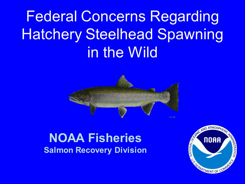 Federal Concerns Regarding Hatchery Steelhead Spawning in the Wild NOAA Fisheries Salmon Recovery Division