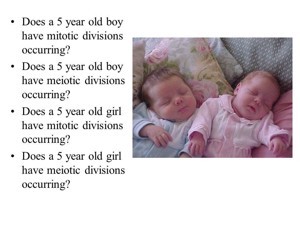 Does a 5 year old boy have mitotic divisions occurring? Does a 5 year old boy have meiotic divisions occurring? Does a 5 year old girl have mitotic di
