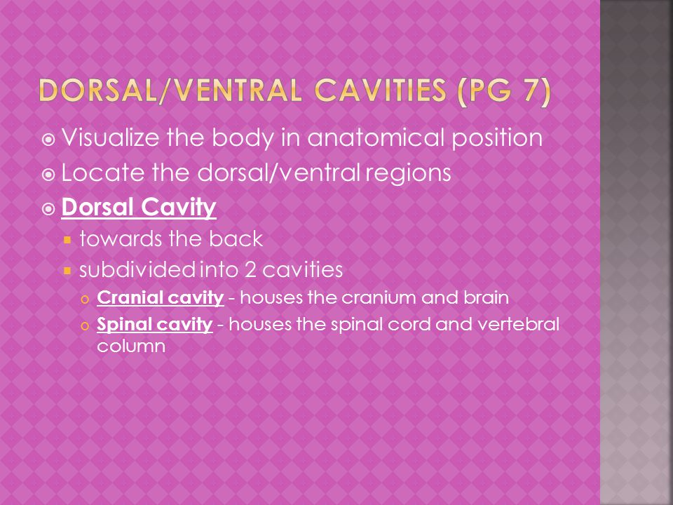  Visualize the body in anatomical position  Locate the dorsal/ventral regions  Dorsal Cavity  towards the back  subdivided into 2 cavities Cranial cavity - houses the cranium and brain Spinal cavity - houses the spinal cord and vertebral column
