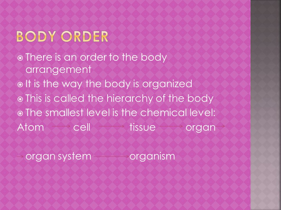  There is an order to the body arrangement  It is the way the body is organized  This is called the hierarchy of the body  The smallest level is the chemical level: Atom celltissueorgan organ systemorganism