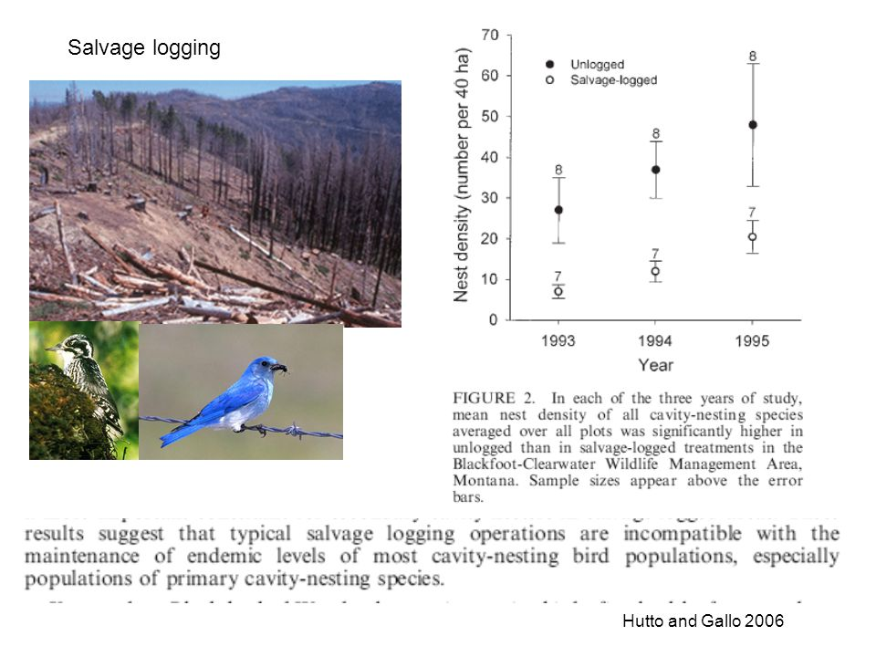 Salvage logging Hutto and Gallo 2006