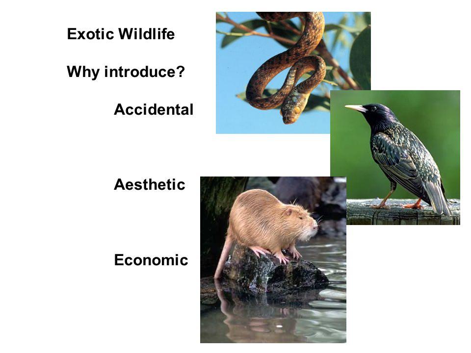 Exotic Wildlife Why introduce? Accidental Aesthetic Economic