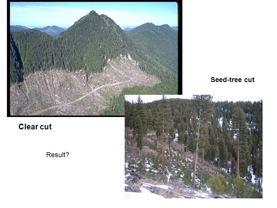 Clear cut Seed-tree cut Result?