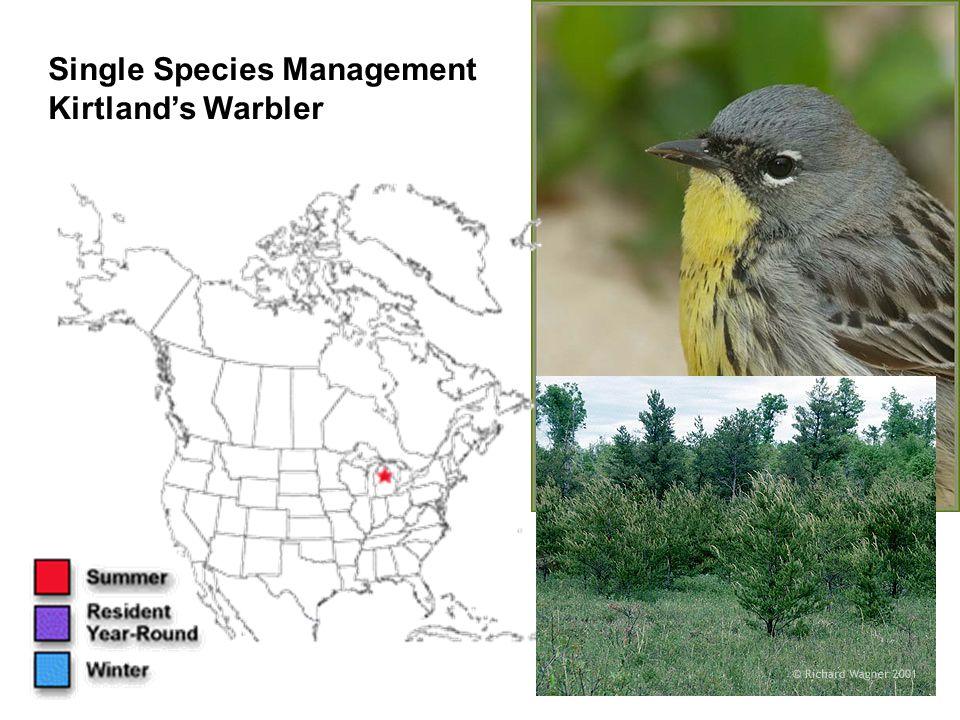 Single Species Management Kirtland's Warbler