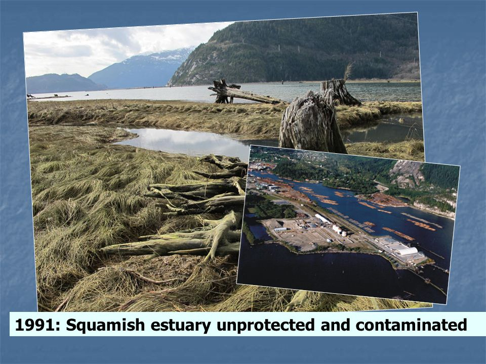 1991: Squamish estuary unprotected and contaminated