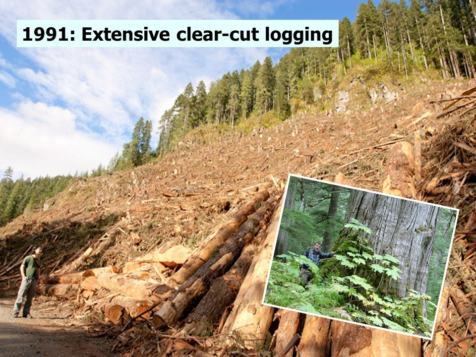 1991: Extensive clear-cut logging