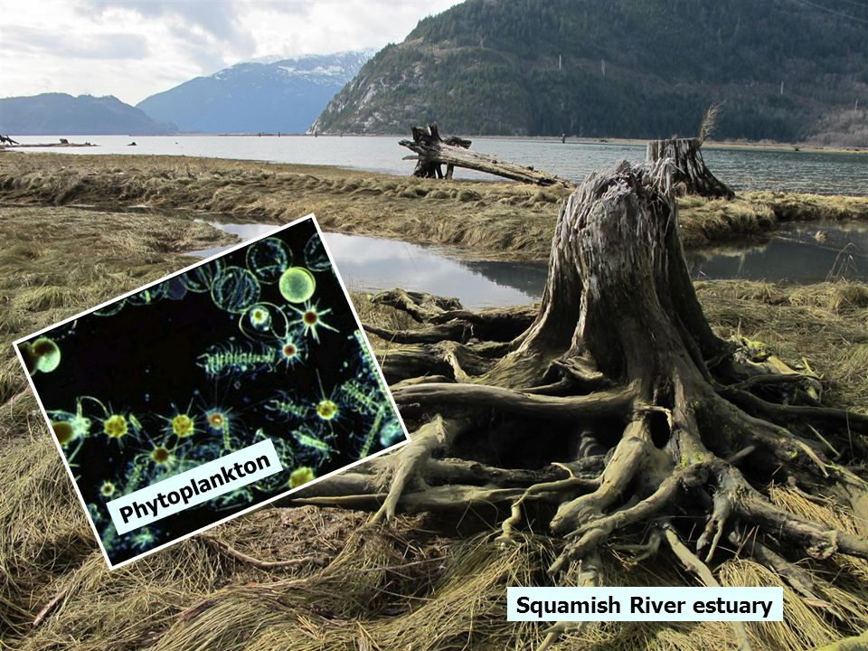 Add photo of Phyto plankton Squamish River estuary