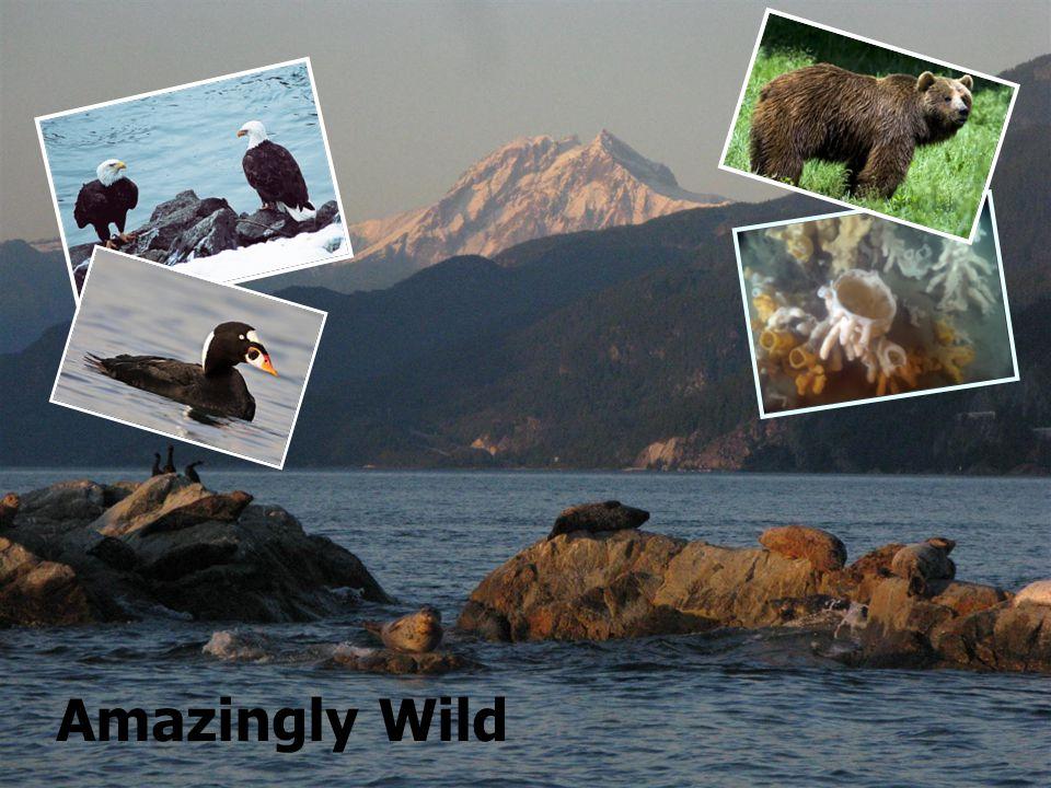 Amazingly Wild