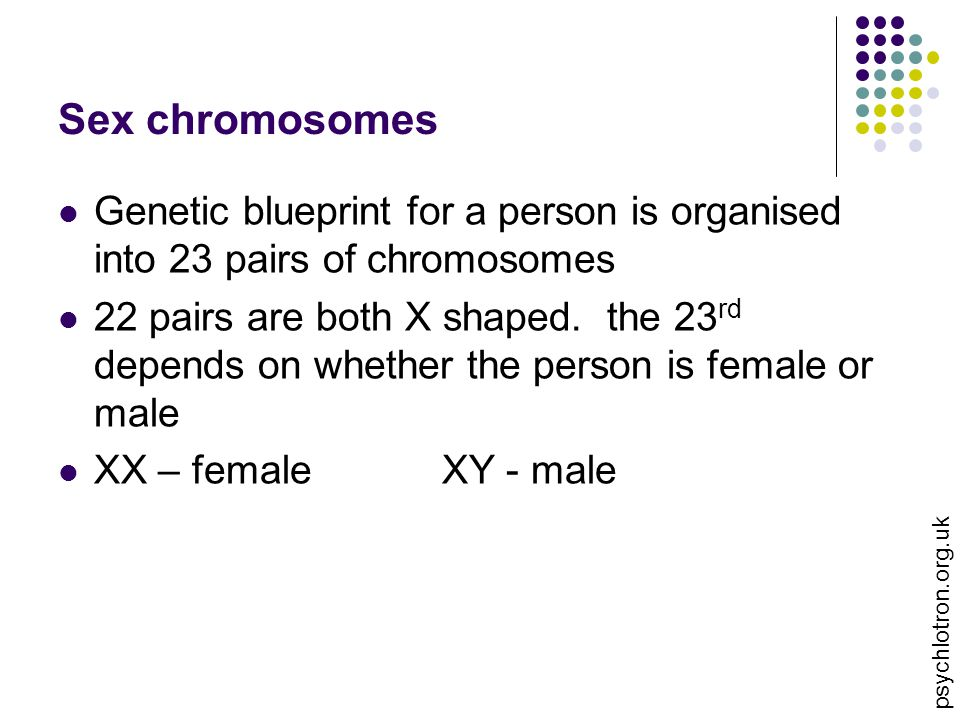 Sex chromosomes Genetic blueprint for a person is organised into 23 pairs of chromosomes 22 pairs are both X shaped. the 23 rd depends on whether the