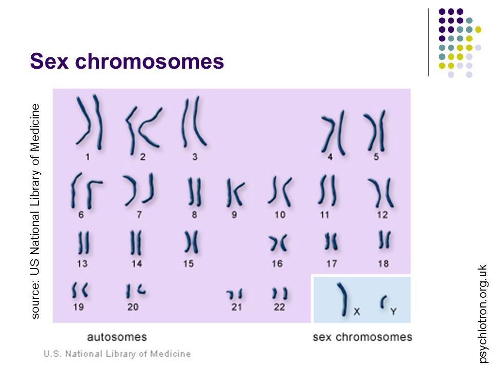 Sex chromosomes source: US National Library of Medicine psychlotron.org.uk