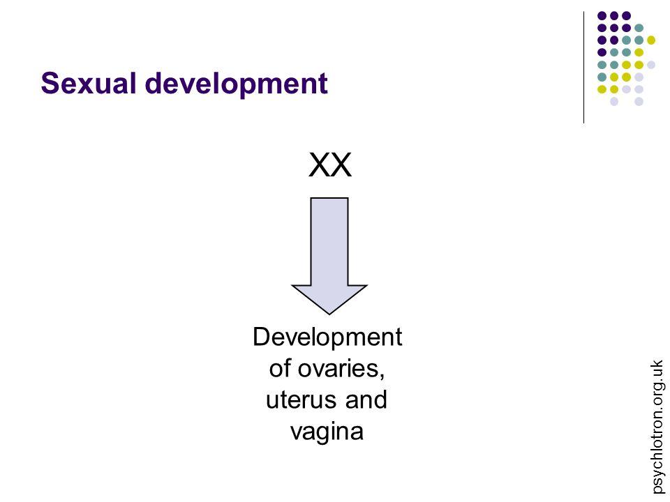 Sexual development XX Development of ovaries, uterus and vagina psychlotron.org.uk
