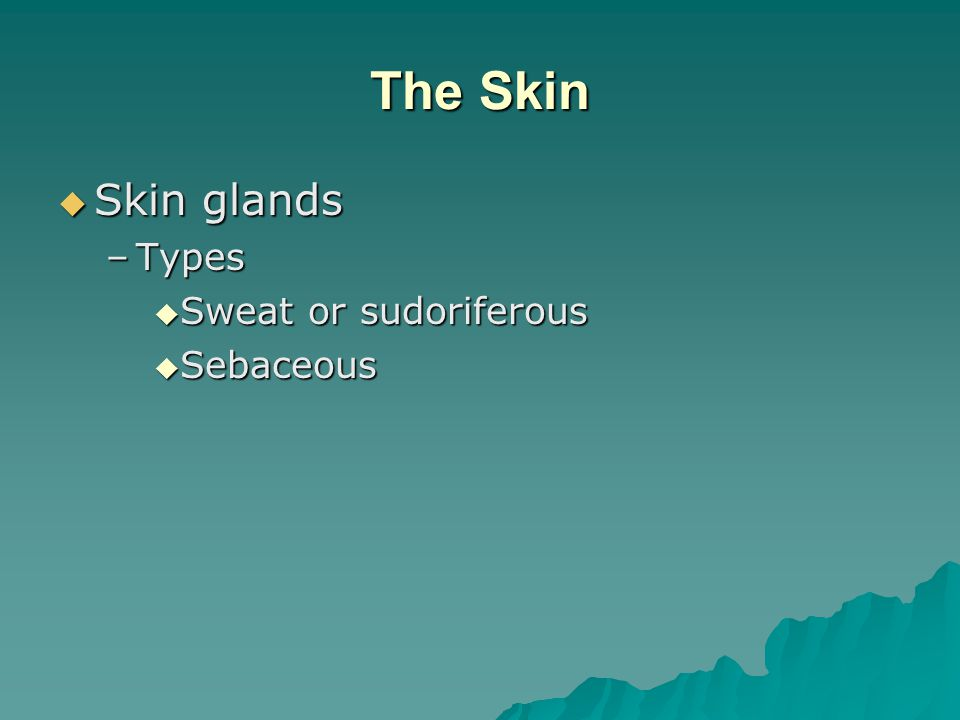 The Skin  Skin glands –Types  Sweat or sudoriferous  Sebaceous