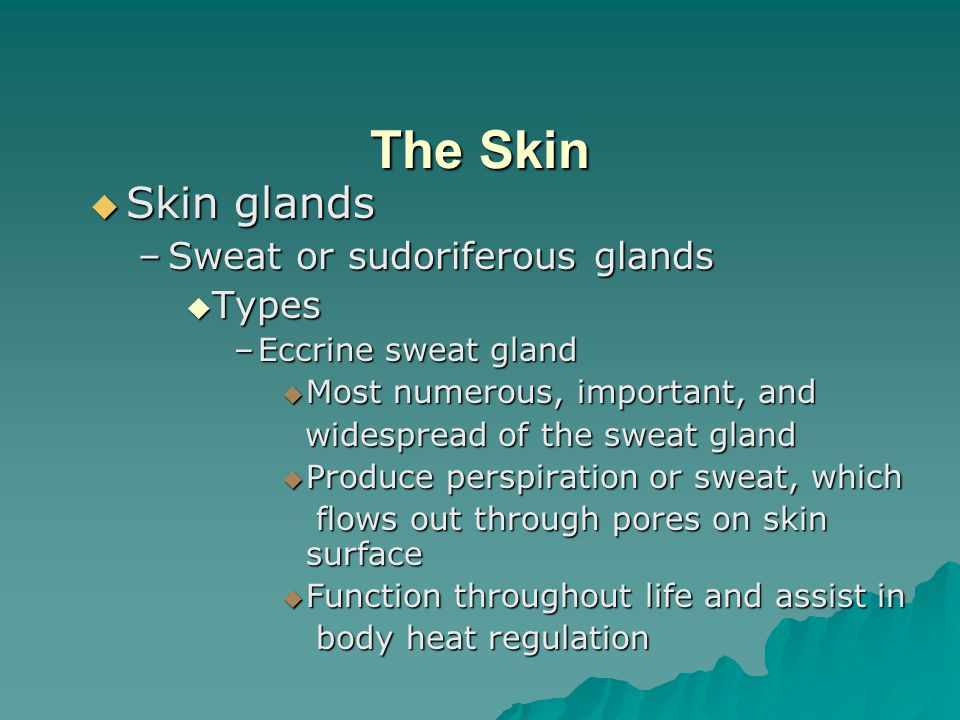 The Skin  Skin glands –Sweat or sudoriferous glands  Types –Eccrine sweat gland  Most numerous, important, and widespread of the sweat gland widespread of the sweat gland  Produce perspiration or sweat, which flows out through pores on skin surface flows out through pores on skin surface  Function throughout life and assist in body heat regulation body heat regulation