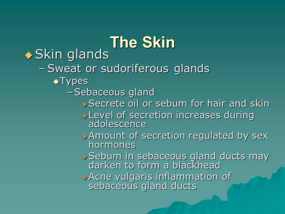 The Skin  Skin glands –Sweat or sudoriferous glands  Types –Sebaceous gland  Secrete oil or sebum for hair and skin  Level of secretion increases during adolescence  Amount of secretion regulated by sex hormones  Sebum in sebaceous gland ducts may darken to form a blackhead  Acne vulgaris inflammation of sebaceous gland ducts