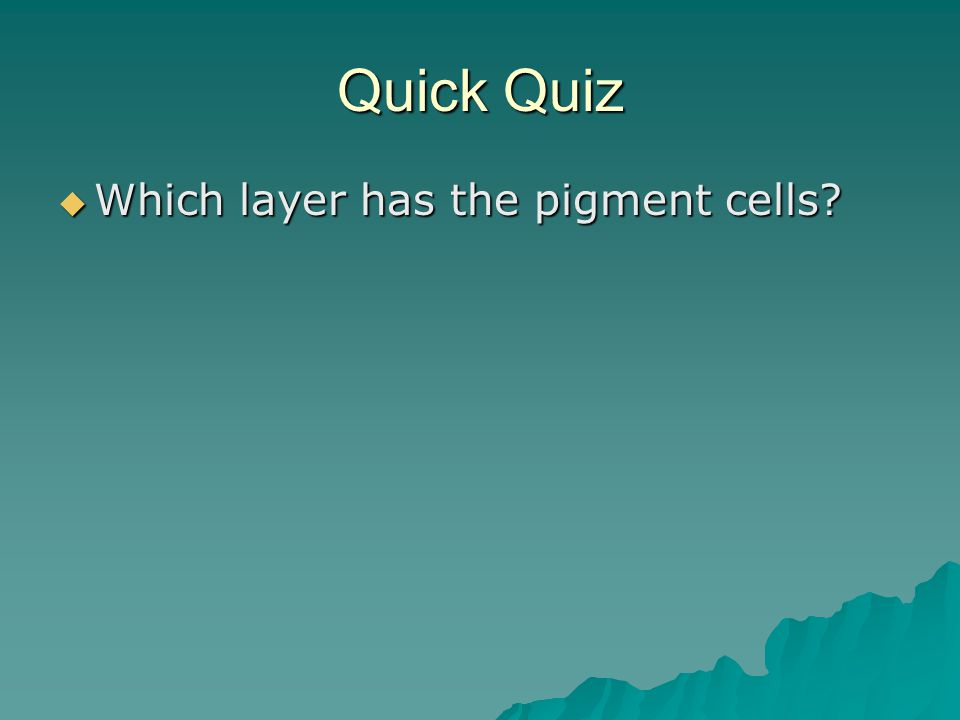 Quick Quiz  Which layer has the pigment cells?