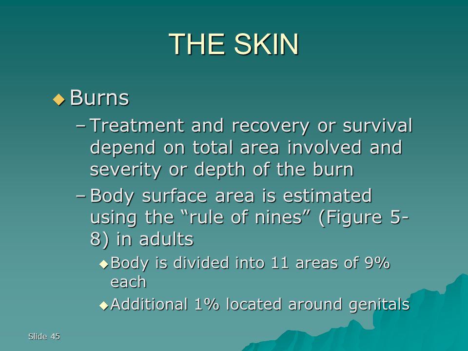 Slide 45 THE SKIN  Burns –Treatment and recovery or survival depend on total area involved and severity or depth of the burn –Body surface area is estimated using the rule of nines (Figure 5- 8) in adults  Body is divided into 11 areas of 9% each  Additional 1% located around genitals
