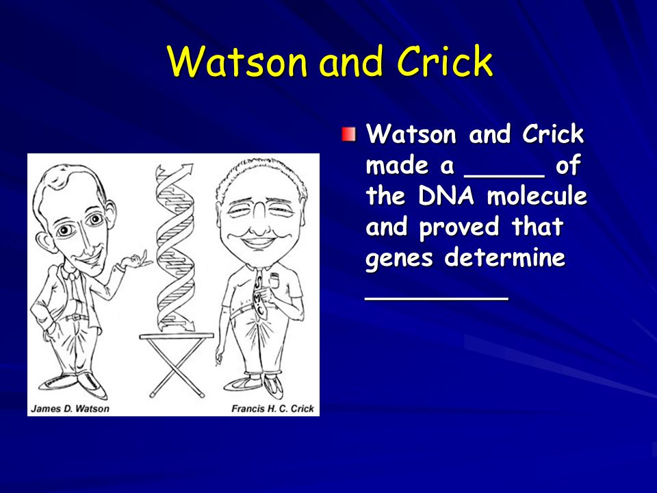 Watson and Crick Watson and Crick made a _____ of the DNA molecule and proved that genes determine _________