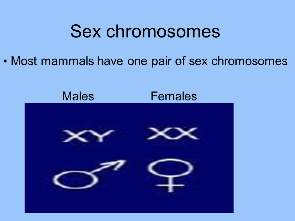Sex chromosomes Most mammals have one pair of sex chromosomes Males Females