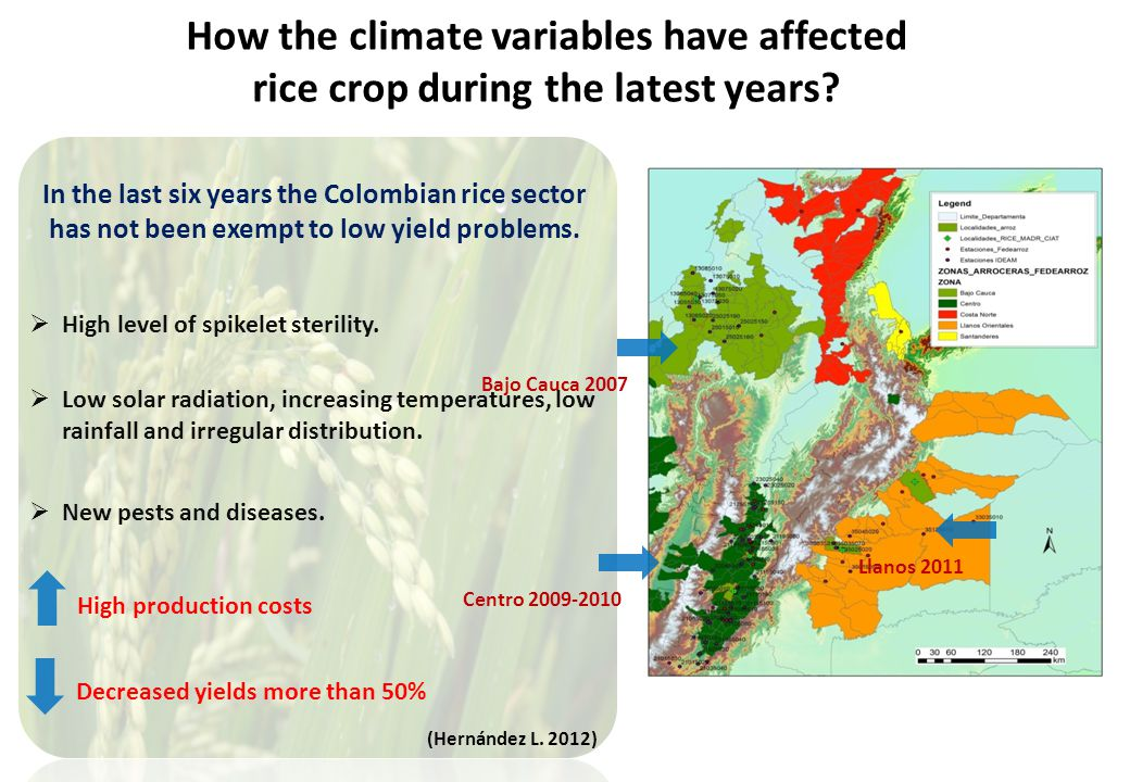 How the climate variables have affected rice crop during the latest years.