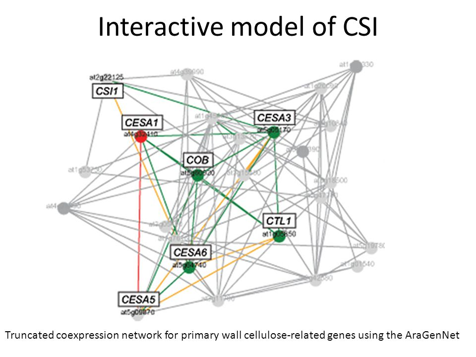 Interactive model of CSI Truncated coexpression network for primary wall cellulose-related genes using the AraGenNet