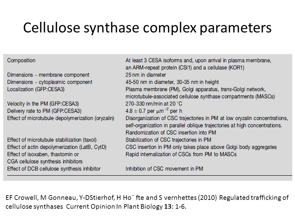 Cellulose synthase complex parameters EF Crowell, M Gonneau, Y-DStierhof, H Ho¨ fte and S vernhettes (2010) Regulated trafficking of cellulose synthases Current Opinion In Plant Biology 13: 1-6.