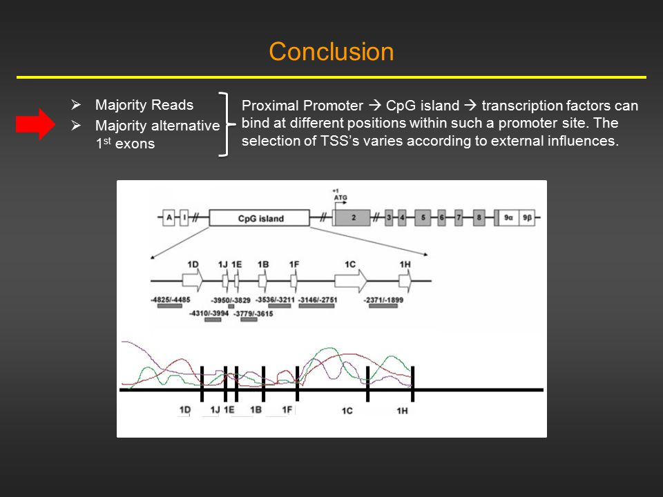 Conclusion  Majority Reads  Majority alternative 1 st exons Proximal Promoter  CpG island  transcription factors can bind at different positions w