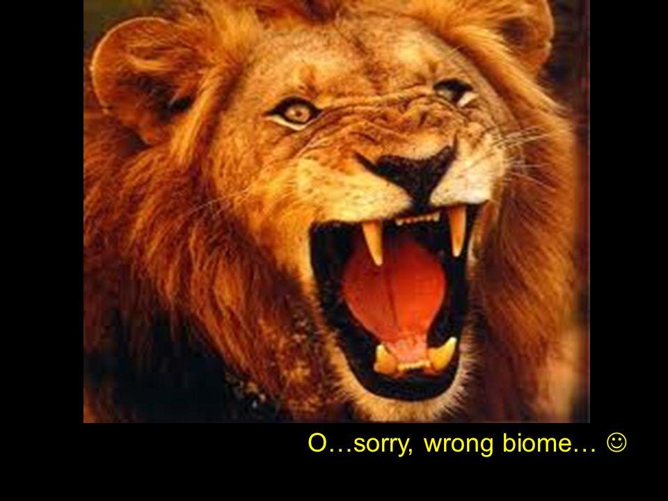 O…sorry, wrong biome…