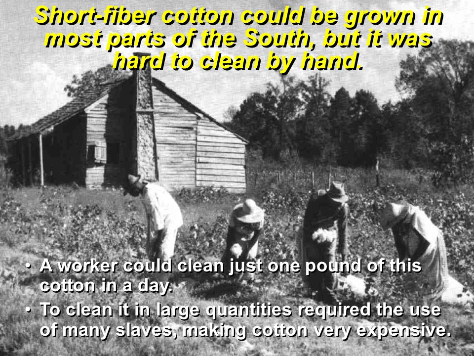 Short-fiber cotton could be grown in most parts of the South, but it was hard to clean by hand.