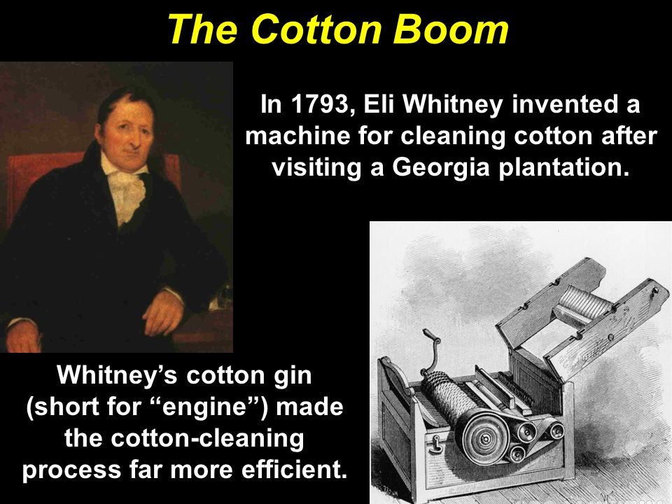 The Cotton Boom In 1793, Eli Whitney invented a machine for cleaning cotton after visiting a Georgia plantation.
