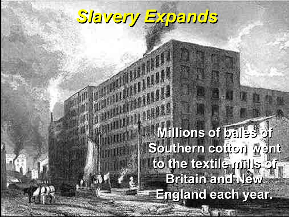 Slavery Expands Millions of bales of Southern cotton went to the textile mills of Britain and New England each year.
