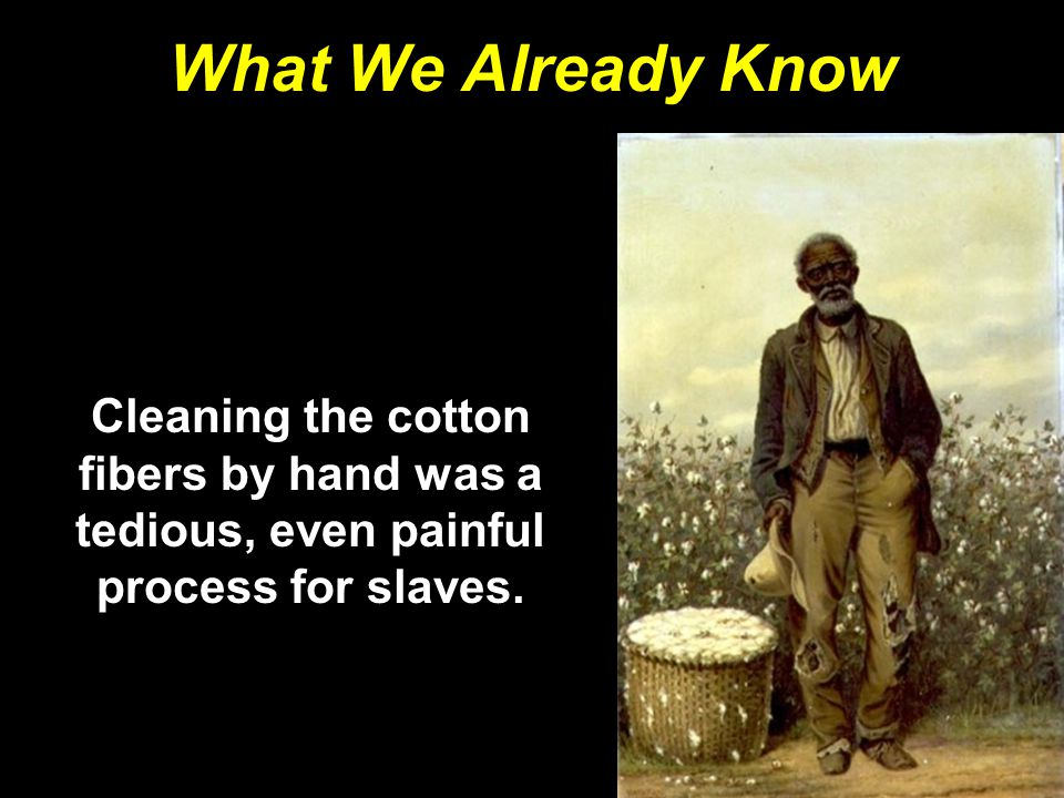 What We Already Know Cleaning the cotton fibers by hand was a tedious, even painful process for slaves.