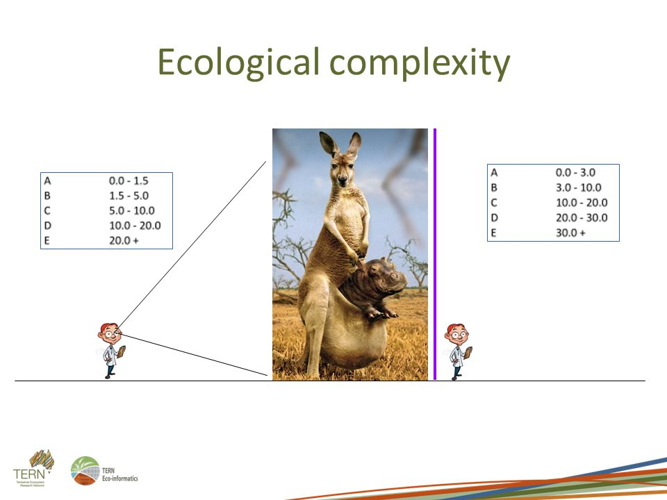 Ecological complexity