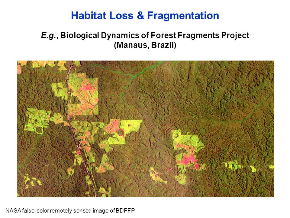 NASA false-color remotely sensed image of BDFFP E.g., Biological Dynamics of Forest Fragments Project (Manaus, Brazil) Habitat Loss & Fragmentation