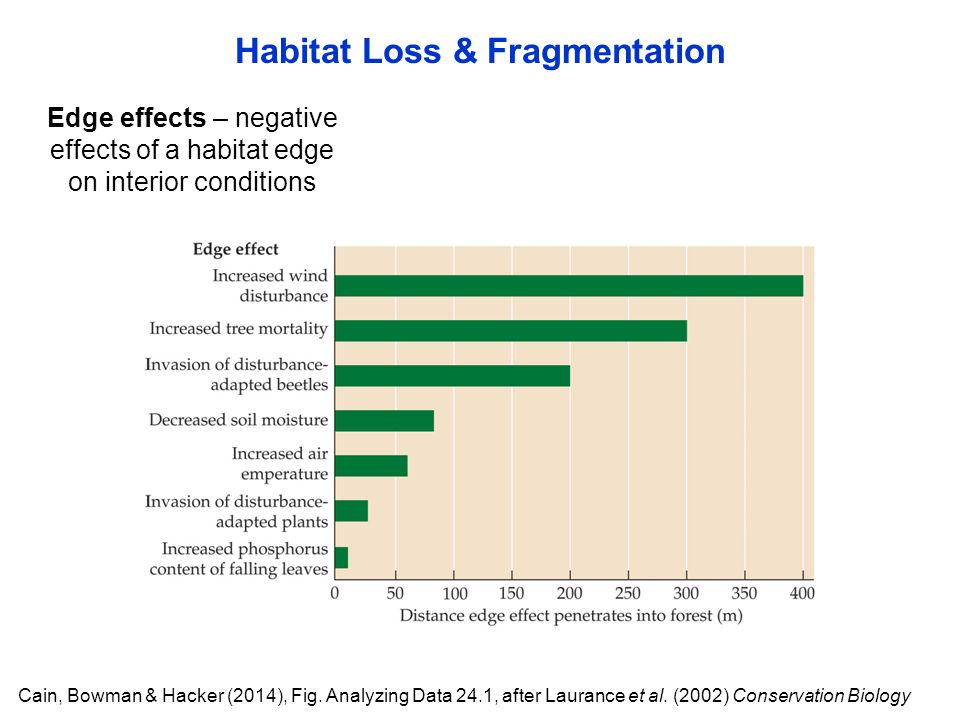 Habitat Loss & Fragmentation Edge effects – negative effects of a habitat edge on interior conditions Cain, Bowman & Hacker (2014), Fig. Analyzing Dat