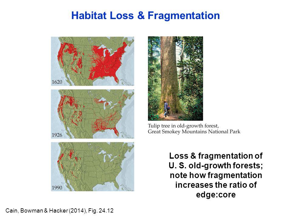 Habitat Loss & Fragmentation Cain, Bowman & Hacker (2014), Fig. 24.12 Loss & fragmentation of U. S. old-growth forests; note how fragmentation increas